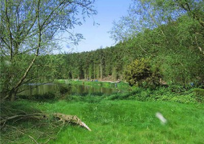 Risby Park Fishing Ponds0028