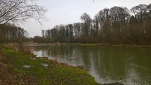 Folly Lake Risby Park Fishing Ponds